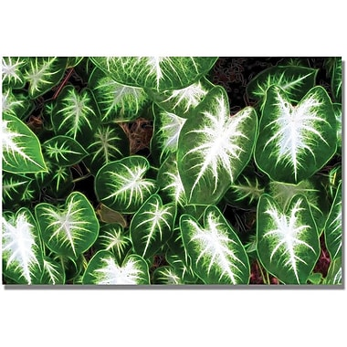 Trademark Global Kathie McCurdy 'Caladium Leaves' Canvas Art