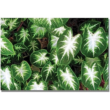 Trademark Global Kathie McCurdy Caladium Leaves Canvas Art