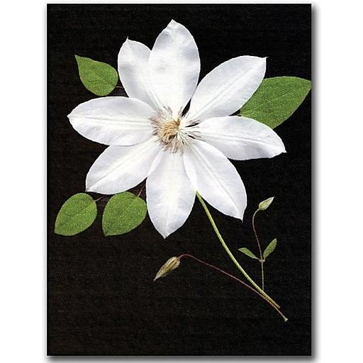 "Trademark Global Kathie McCurdy ""Star"" Canvas Art, 47"" x 35"""
