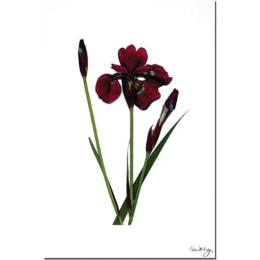 "Trademark Global Kathie McCurdy ""Spicy Iris"" Canvas Art, 24"" x 16"""