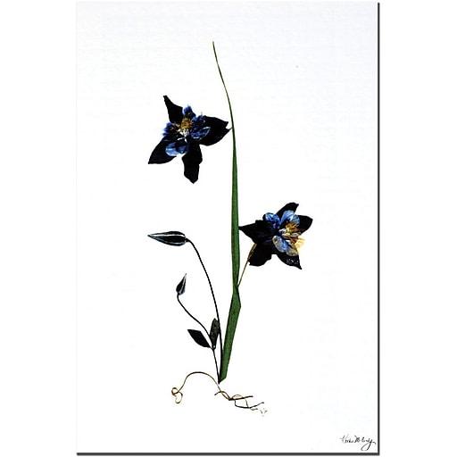 "Trademark Global Kathie McCurdy ""Ground Up"" Canvas Art, 24"" x 16"""