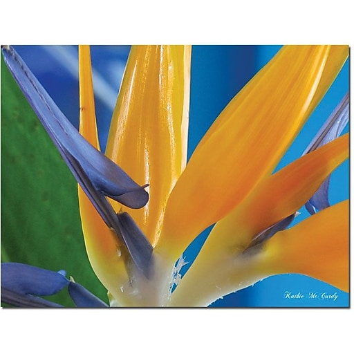 "Trademark Global Kathie McCurdy ""Bird of Paradise"" Canvas Art, Medium, 24"" x 32"""
