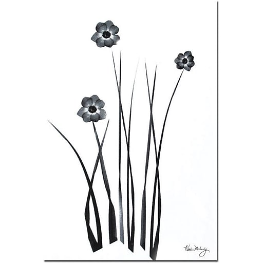 """Trademark Global Kathie McCurdy """"Black and White Bunch"""" Canvas Art, 24"""" x 16"""""""