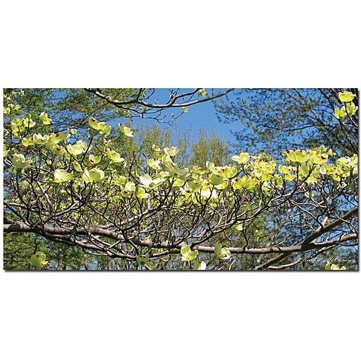 "Trademark Global Kathie McCurdy ""Dogwood Branches"" Canvas Art, 24"" x 47"""