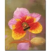 "Trademark Global ""Orange-Pink Orchid"" Canvas Art, 19"" x 14"""