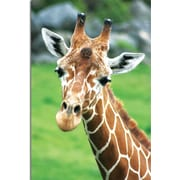 "Trademark Global Patty Tuggle ""Giraffe Hello"" Canvas Art, 24"" x 16"""