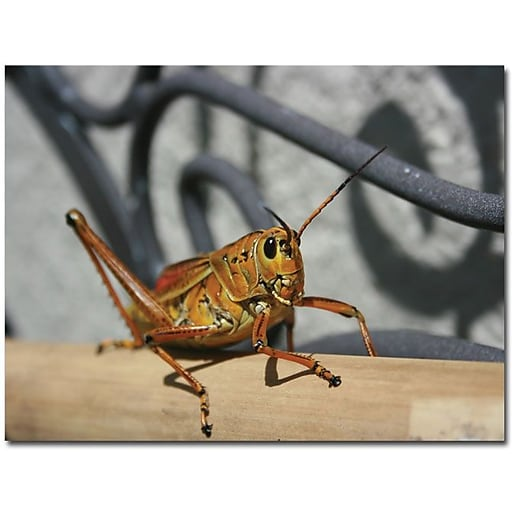 "Trademark Global Patty Tuggle ""Grasshopper"" Canvas Art, 18"" x 24"""