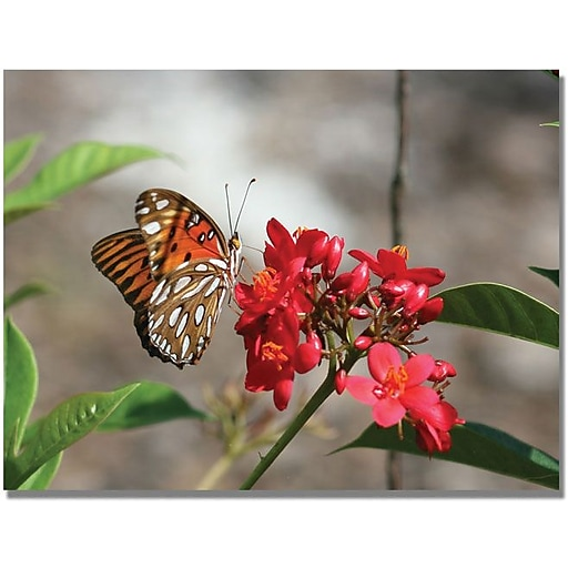 """Trademark Global Patty Tuggle """"Butterfly on Red Flowers"""" Canvas Art, 24"""" x 32"""""""