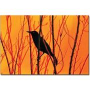 "Trademark Global Patty Tuggle ""Blackbird Dreams II"" Canvas Art, 16"" x 24"""