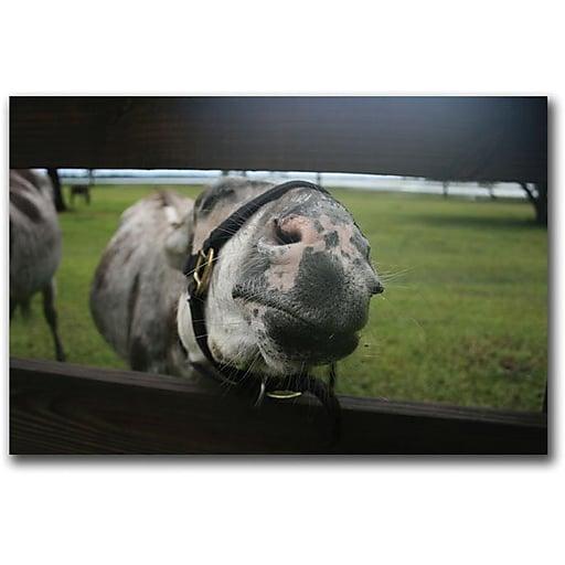 """Trademark Global Patty Tuggle """"Donkey"""" Canvas Art, 16"""" x 24"""""""