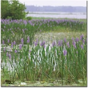"Trademark Global Patty Tuggle ""Floral Lake"" Canvas Art, 24"" x 24"""