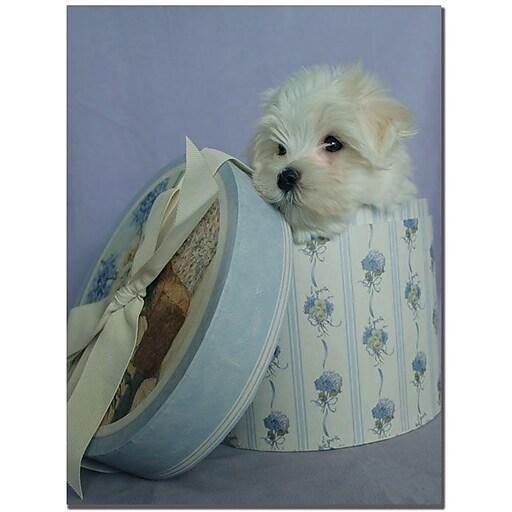 "Trademark Global Patty Tuggle ""Maltese Puppy Present"" Canvas Art, 24"" x 18"""
