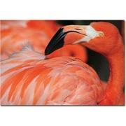 "Trademark Global Patty Tuggle ""Pink Flamingo"" Canvas Art, 16"" x 24"""