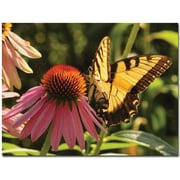 "Trademark Global Patty Tuggle ""Butterfly I"" Canvas Art, 24"" x 32"""