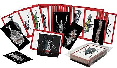 Roylco® X-Ray, Insect with Picture Cards