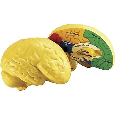 Learning Resources® Soft Foam Cross-Section Human Brain Model