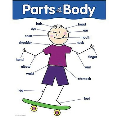 Creative Teaching Press™ Parts of The Body Basic Skills Chart