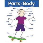 Parts Of The Body  Basic Skills Chart