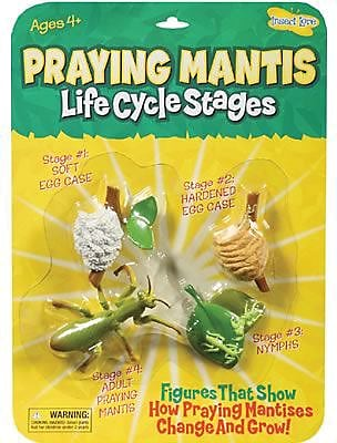 Insect Lore® Praying Mantis Life Cycle Stages Figures (ILP2510)