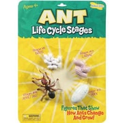 Insect Lore® Ant Life Cycle Stages Figures