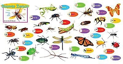 Discover Insects Mini Bulletin Board Set