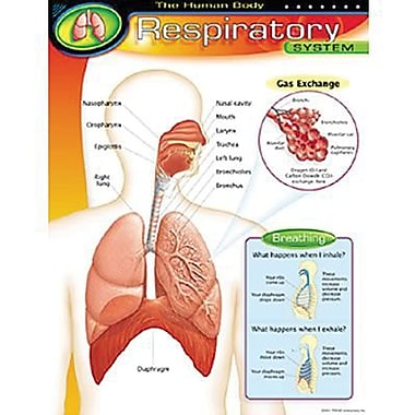 Trend Enterprises® The Human Body Respiratory System Learning Chart