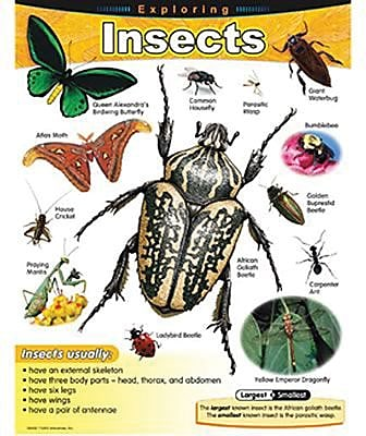Trend Enterprises® Exploring Insects Learning Chart