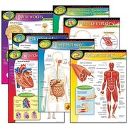 Trend Enterprises® The Human Body Learning Chart