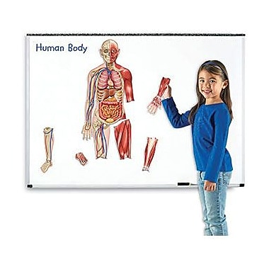 Learning Resources® Double-Sided Magnetic Human Body