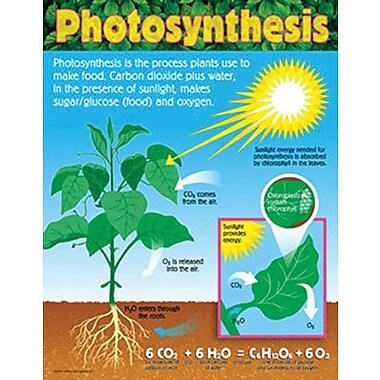 Trend Enterprises® Photosynthesis Learning Chart