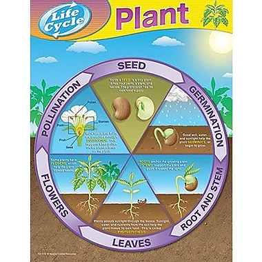 Teacher Created Resources® Plant Life Cycles Chart