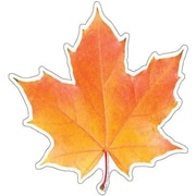 Eureka® Toddler - 12th Grades Paper Cut-Outs, Photo Real Leaf