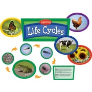 Edupress® Bulletin Board Set, Exploring Life Cycles