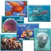 "Edupress EP3192 8"" x 6"" Straight Under The Sea Ocean Instructional Accents, Multicolor"