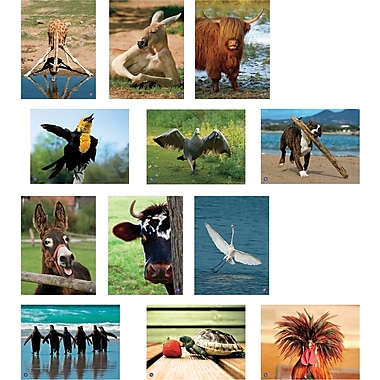 North Star Teacher Resources® Amusing Animals Language Cards
