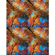 MAP Brand Scenic Laser Postcards Autumn Colors