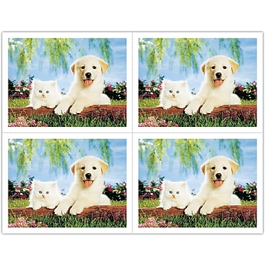 MAP Brand Generic Laser Postcards Dog & Cat