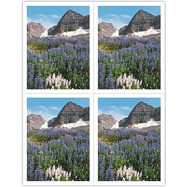 MAP Brand Scenic Laser Postcards Flowers in Meadow