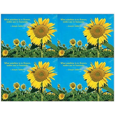 MAP Brand Scenic Deluxe Laser Postcards Sunflower Field