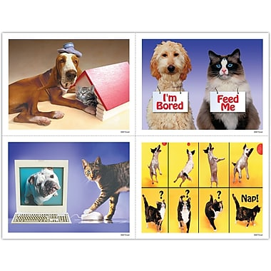 MAP Brand Humorous Assorted Laser Postcards Funny Pets