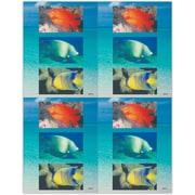 MAP Brand Scenic Laser Postcards Tropical Fish