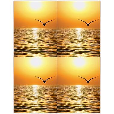 MAP Brand Scenic Laser Postcards Scenic Seagull Sunset