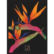 Bird of Paradise Framed Wall Art with Postage Stamp