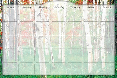 Biggies- Dry Erase Stickie Monthly Calendar, Aspen Grove, 48