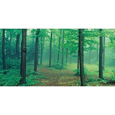 Biggies- Wall Mural -Misty Forest 120