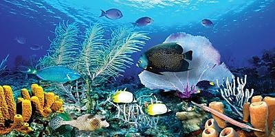 Biggies - Wall Mural-Ocean Reef 80