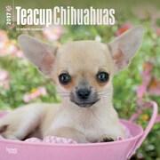 2017 Chihuahuas, Teacup Square 12x12