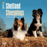 2017 Shetland Sheepdogs Mini 7x7