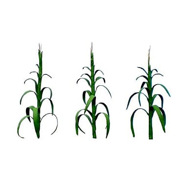 SP Whistle Stop 1 in. Ho Corn Stalks Tall, Pack of 30 (STVN2303)