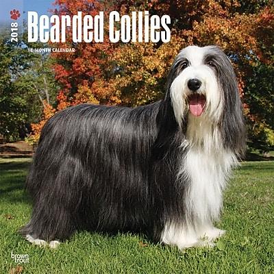 Bearded Collies 2018 12 x 12 Inch Square Wall Calendar